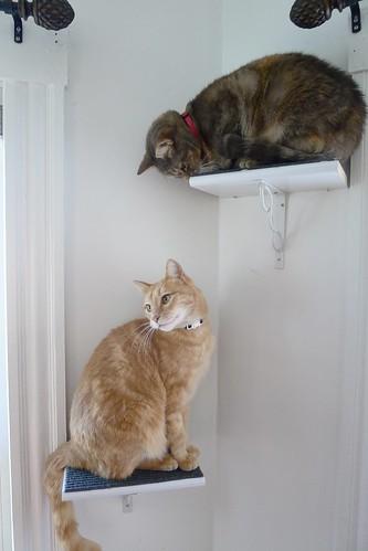 Diy Cat Perches Foxflat