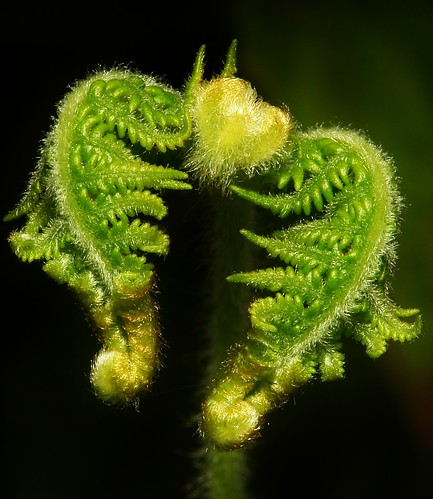 Fresh Fern Fronds