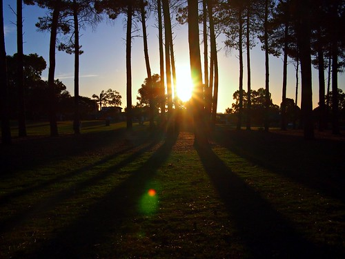 Sunsets through pines trees, Perth