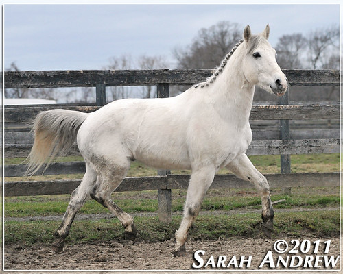 Silver Gem at Horse Rescue United