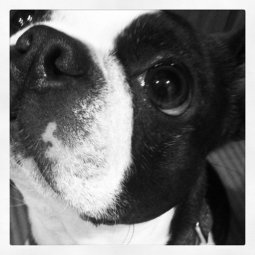 #janphotoaday day 12: Close Up. Aiko wants some bacon.