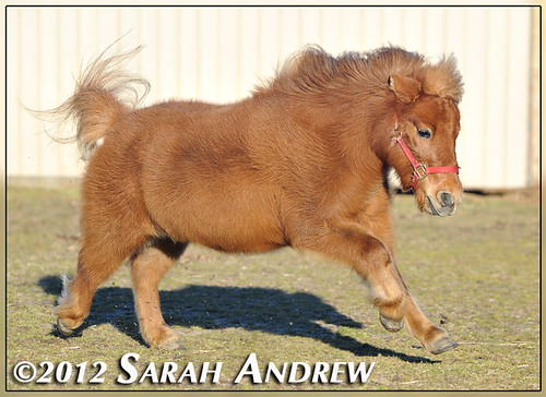 Star- available for adoption from Horse Rescue United