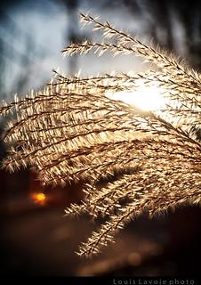 Le soleil brillera