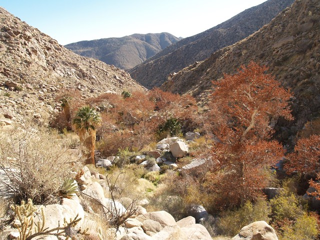 Sheep Canyon in winter colors.