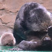 Sea Otter and New Pup