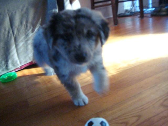 Fuzzy puppy