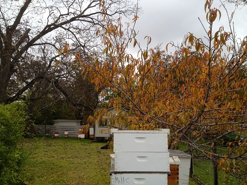 Fall at the Bee Ranch