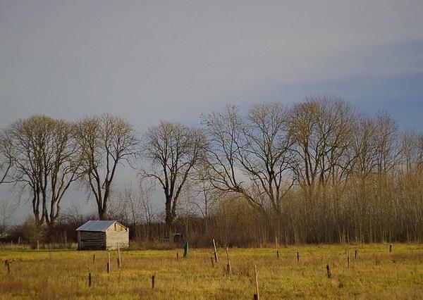 Cabane aux marronniers