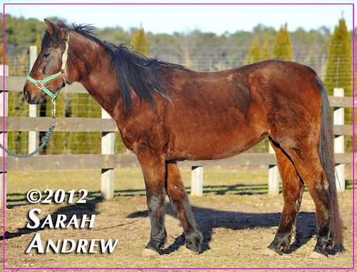 Jessica- available for adoption from Horse Rescue United