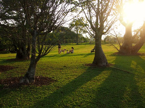 Setting sun. Evening at the Singapore Botanic Gardens