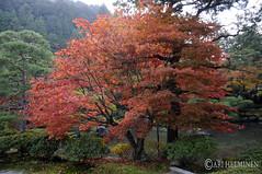 銀閣寺 Ginkakuji temple