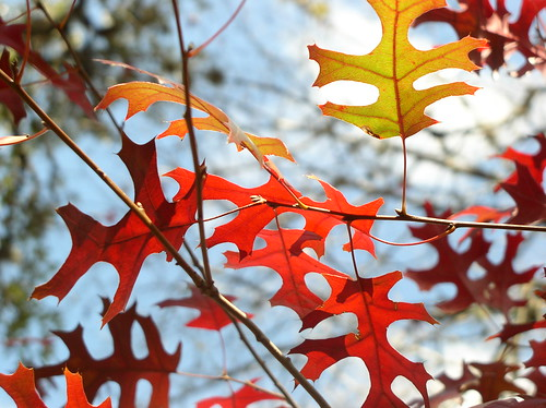Autumnation by Jason A. Samfield