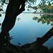 Lake Vembanad