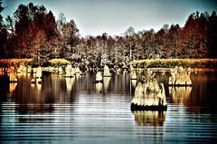 Low Falls Lake Stumps Lomo