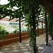 Ecopark trellis 2