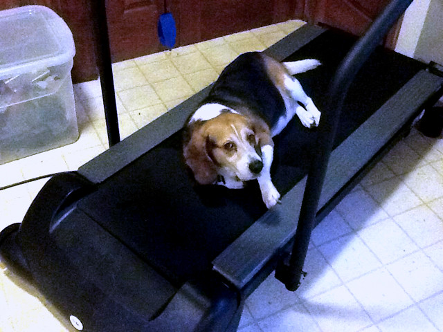 Dog tired on a treadmill!