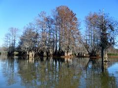Low Falls Cypress