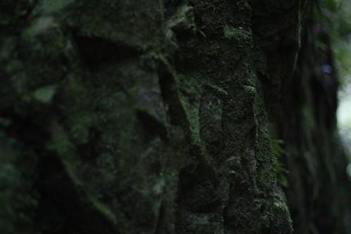 Wednesday: Moss cliff face