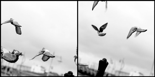 Seagull Diptic by Claire_Sambrook