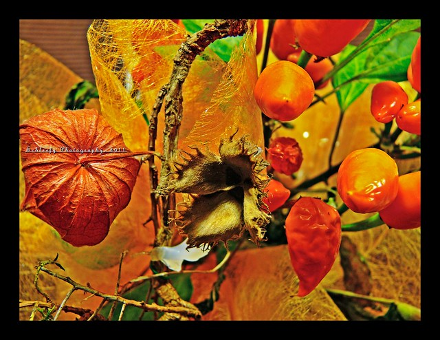 #328/365 Flower Arrangement