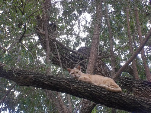 A Crook up a Tree