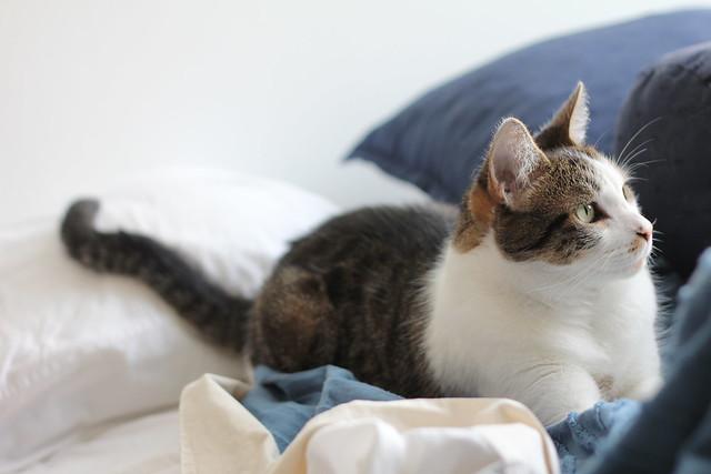 el gato más lindo del mundo