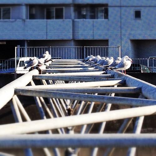 """今朝のワンカット! まるで、女木島の """"カモメの駐車場"""" だね! #iphonography #instagram #iphone4s"""
