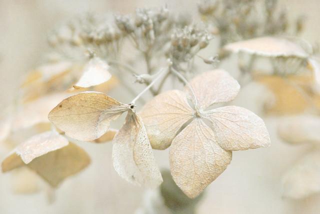 Winter lace   {explore}
