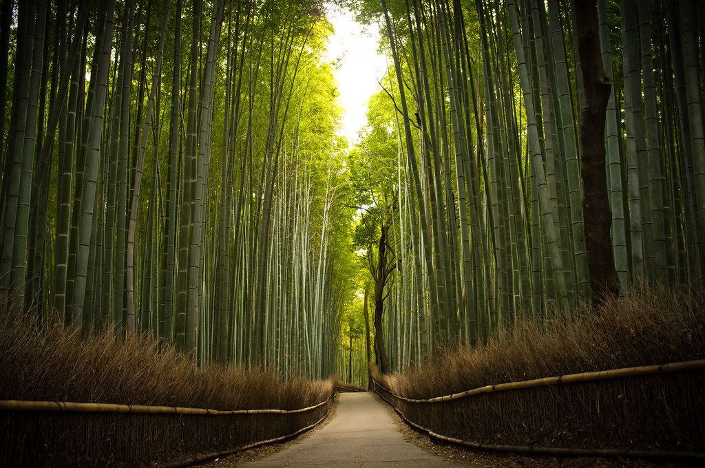 the path of bamboo, revisited #16 (near Tenryuu-ji temple, Kyoto)