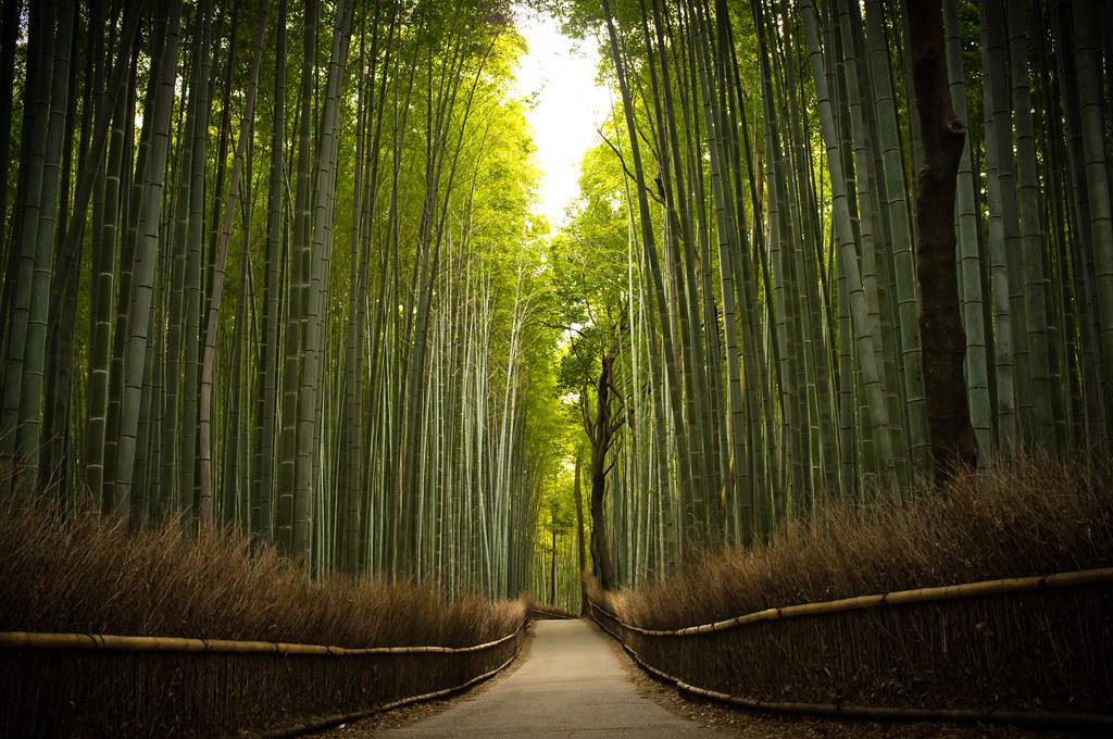 the path of bamboo, revisited #16 (near Tenryuu-ji temple, Kyoto)