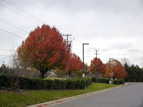 Middleburg, Va-1
