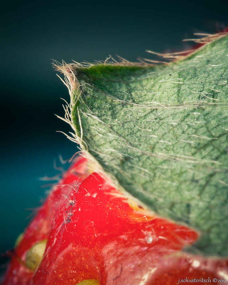 2/366 - Strawberry Leaf