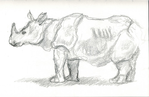 Rhinoceros by husdant