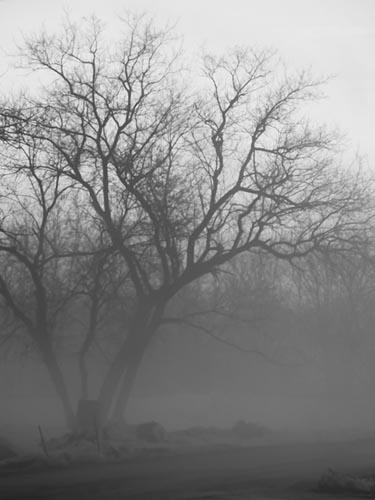 Morning Fog by drobi_123