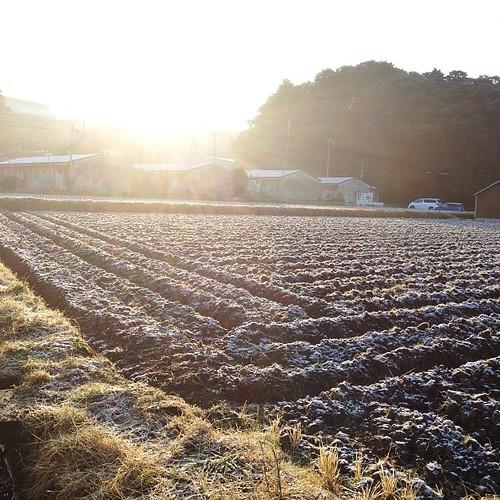 今朝のワンショット! 田んぼに薄っすら雪が積もってましたよ! #iphonography #instagram #iphone4s