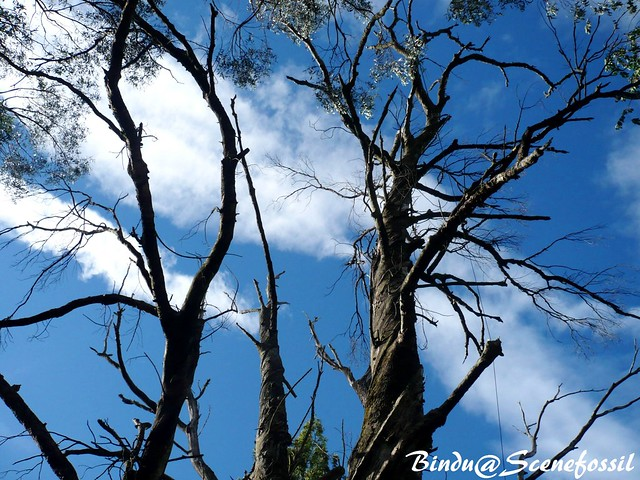 Sky, Clouds and the Antique Trees
