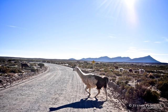 KLR 650 Trip Peru and Bolivia 551