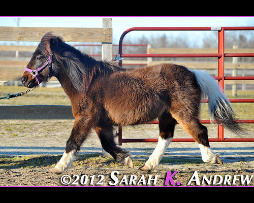 Cocoa - available for adoption from Horse Rescue United