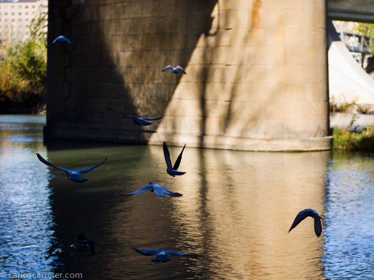 Paseando por la ribera del Ebro