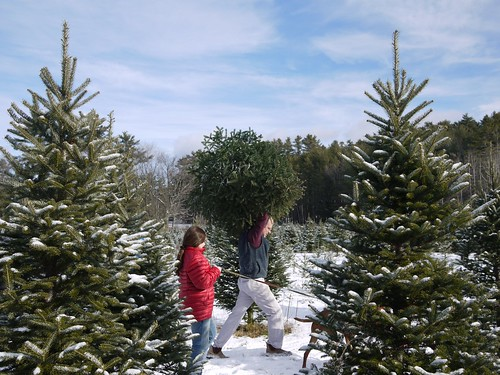Able to lift tall Christmas trees