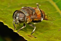 Hoverfly Yoga - the cross reverse inverted overwing dog pose