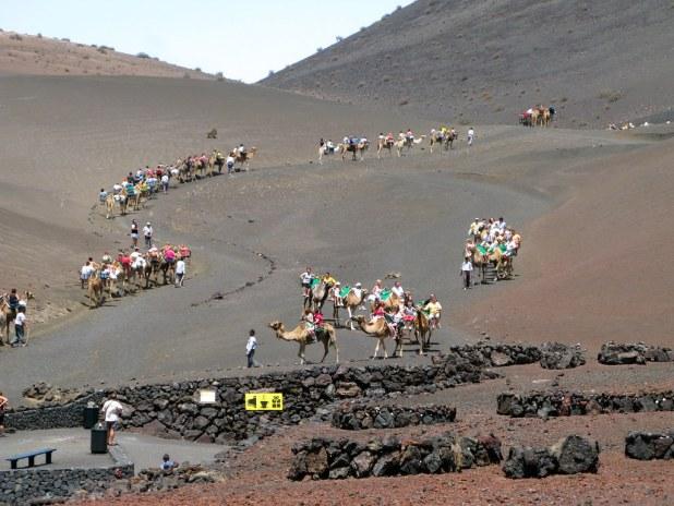 Paseo Camellos Lanzarote