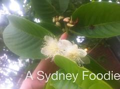 Buzz by A Sydney Foodie