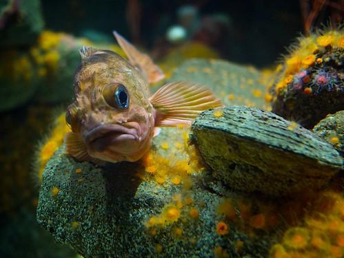 Fish, chillin'