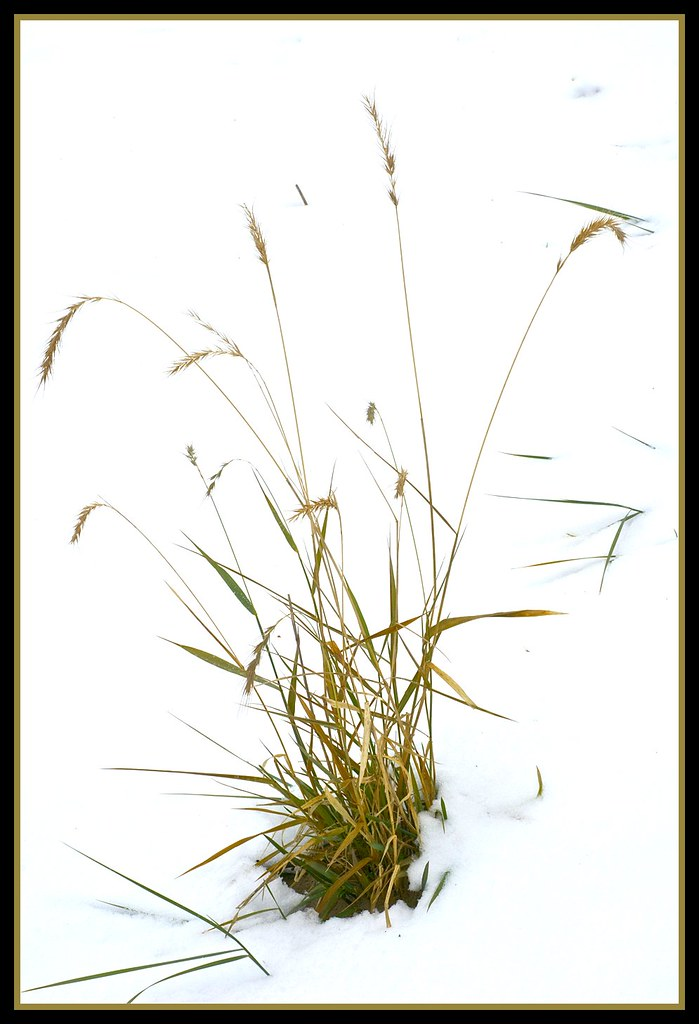 Winter grass