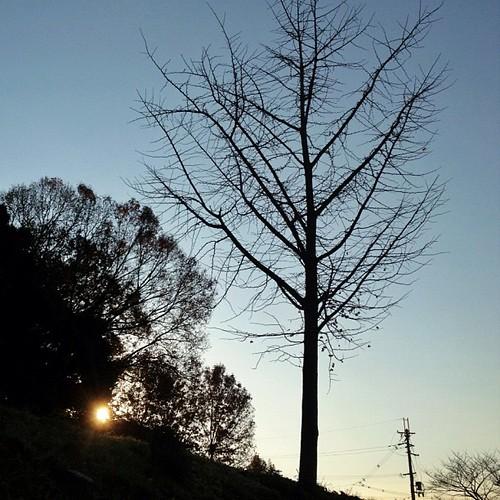 寒くなったねぇ~! 銀杏の葉っぱがもう無いよ。 ^^; #iphonography #instagram #iphone4s