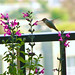 The hummingbird garden on my balcony.