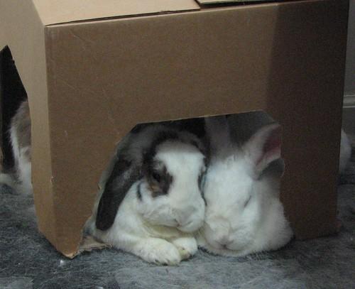 betsy and gus - snuggle buns