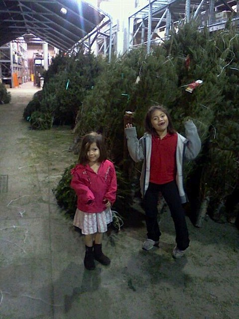 Home Depot trees