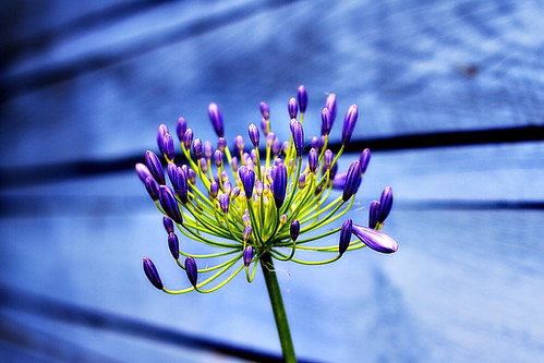 purple flower on blue wooden wall by Matt Hovey